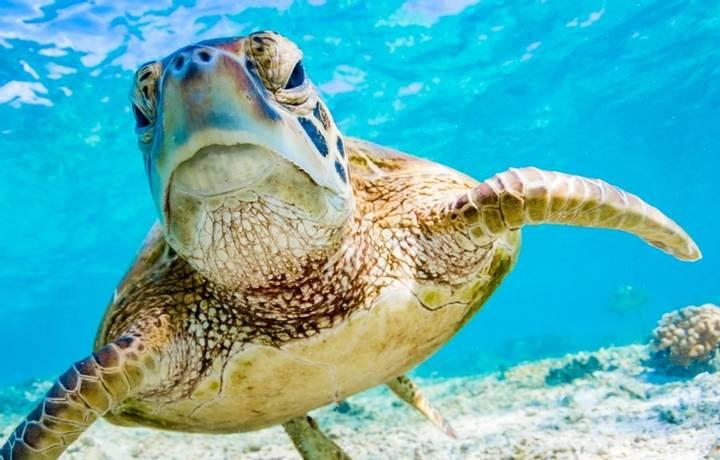 Cairns   Great Barrier Reef   Itinerary Desktop