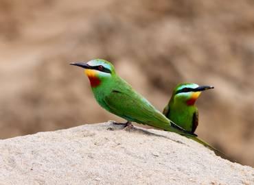Armenia - Spring Birds & Flowers