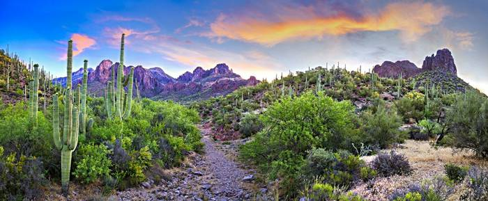 Saguaros, Arizona Shutterstock 547265224