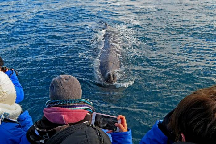 Sperm Whale (Peter Dunn)