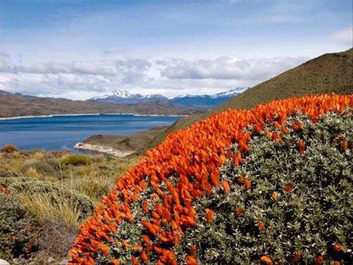 Patagonia Scarlet Gorse (Claudio Vidal)