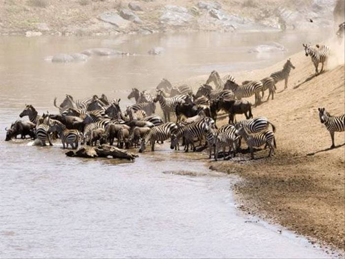 Mara river crossing (Zul Bhatia)