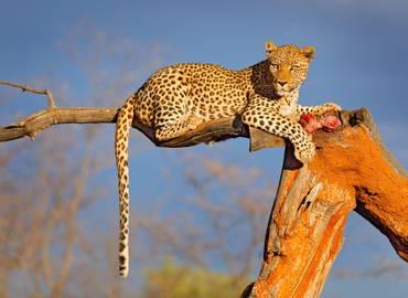 Namibia, Botswana & Zambia - Etosha to the Victoria Falls!
