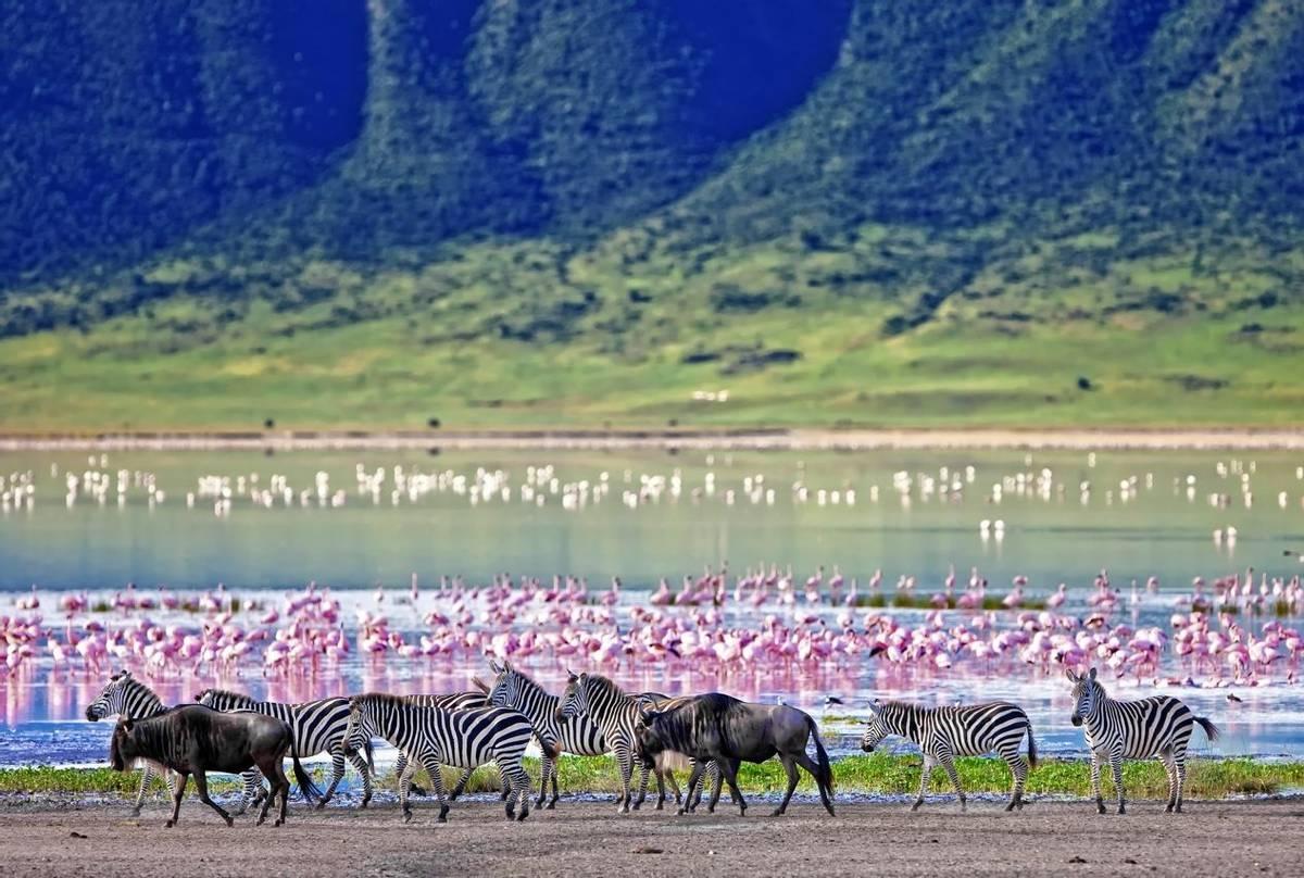 Zebra Ngorongoro Crater, Tanzania Shutterstock 212602420