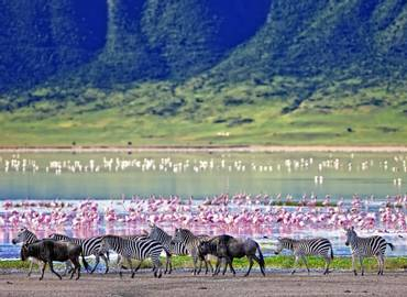 The Best of Northern Tanzania
