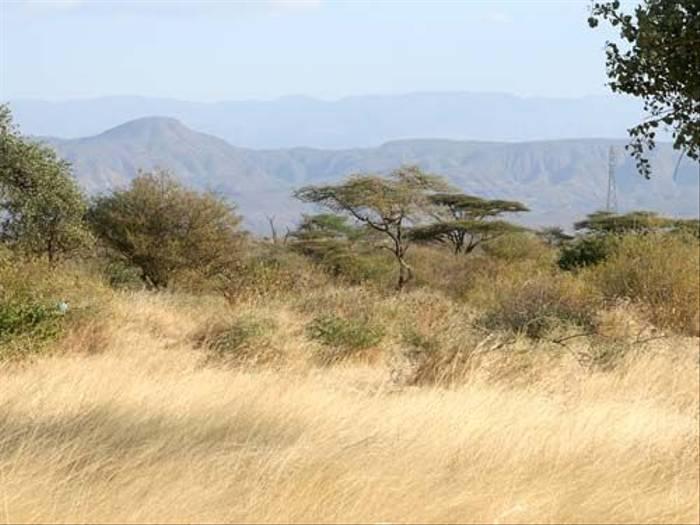 Awash National Park (Julia Casson)