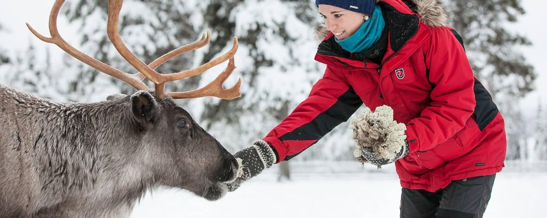 Torassieppi Reindeer Print 2