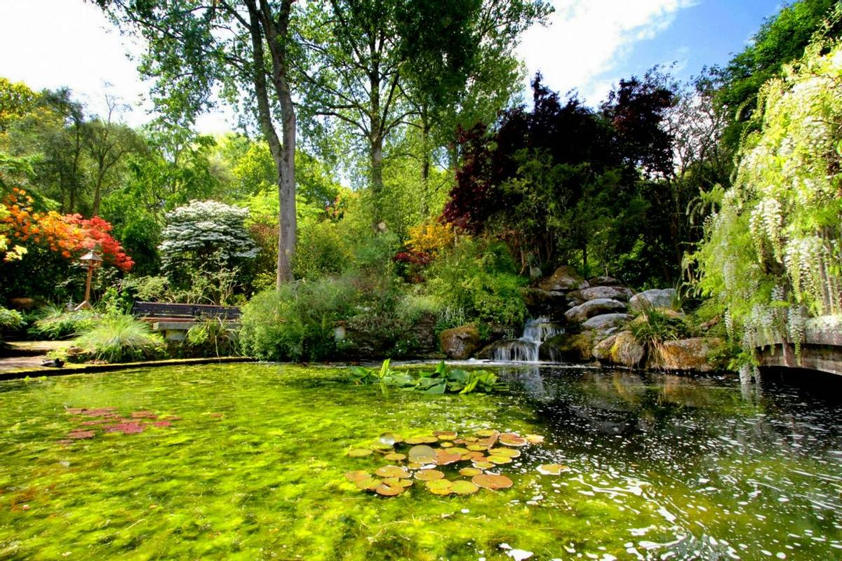 Cornwall -  Great Gardens of Cornwall - Pinetum Gardens - Steve Richards pond.jpg