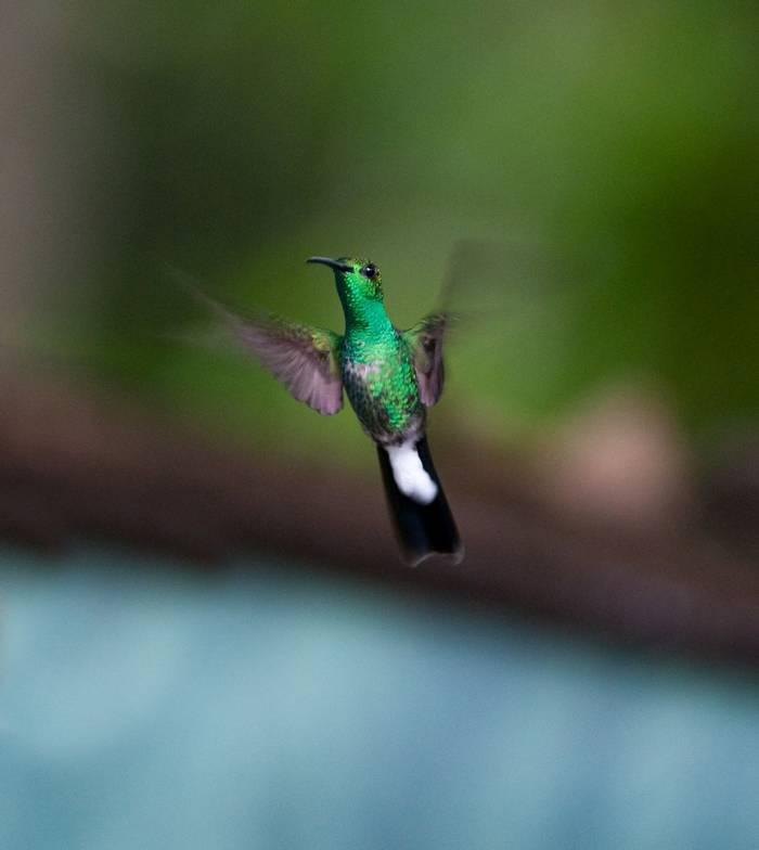 Hummingbird (Tarina Hill)