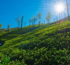 Travel to Nuwara Eliya