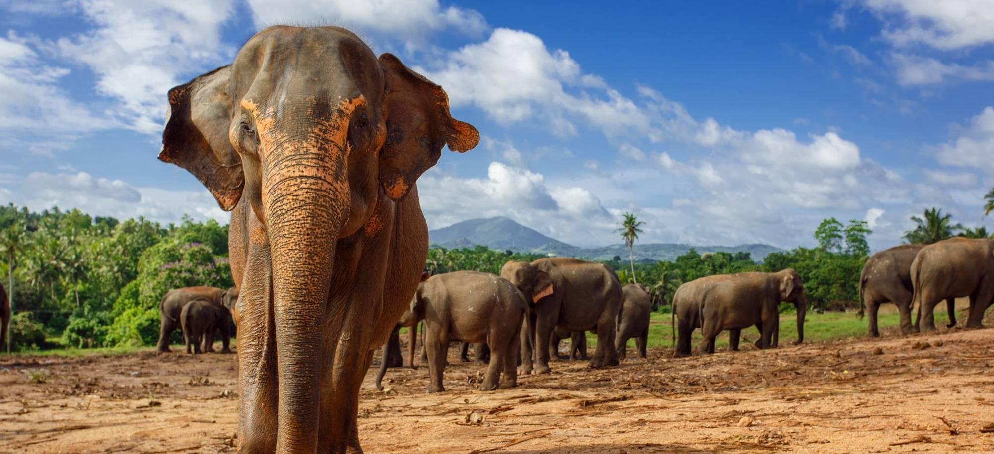 Colombo2   Pinnawala Elephant Orphanage   Itinerary Desktop