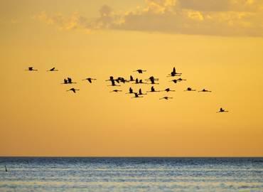 Birding Mar Chiquita