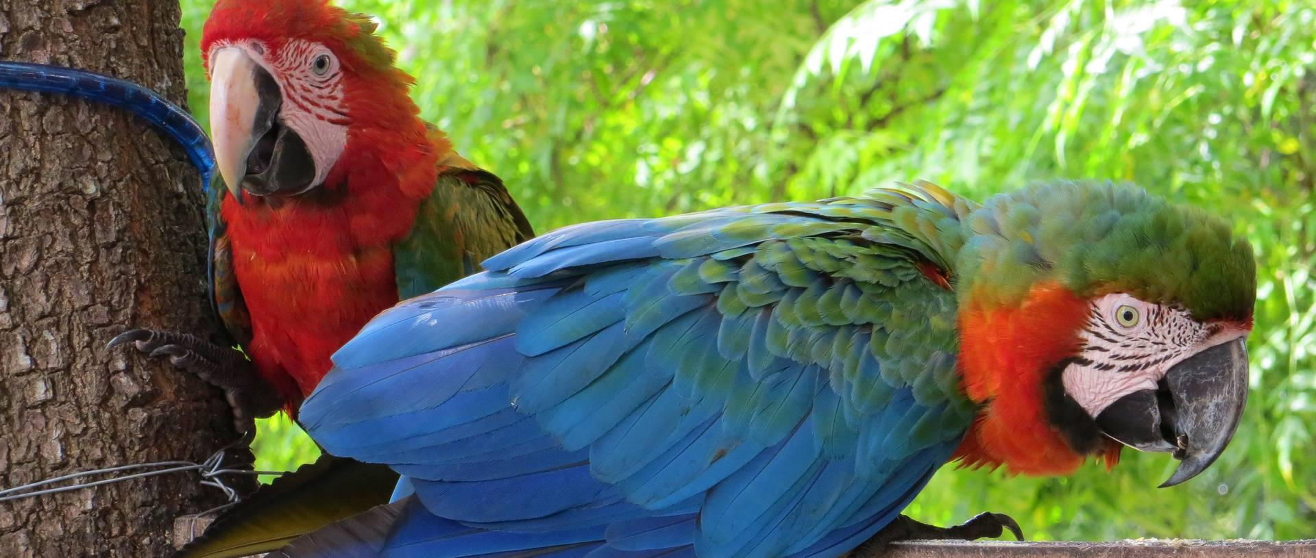 Macaws, Pantanal