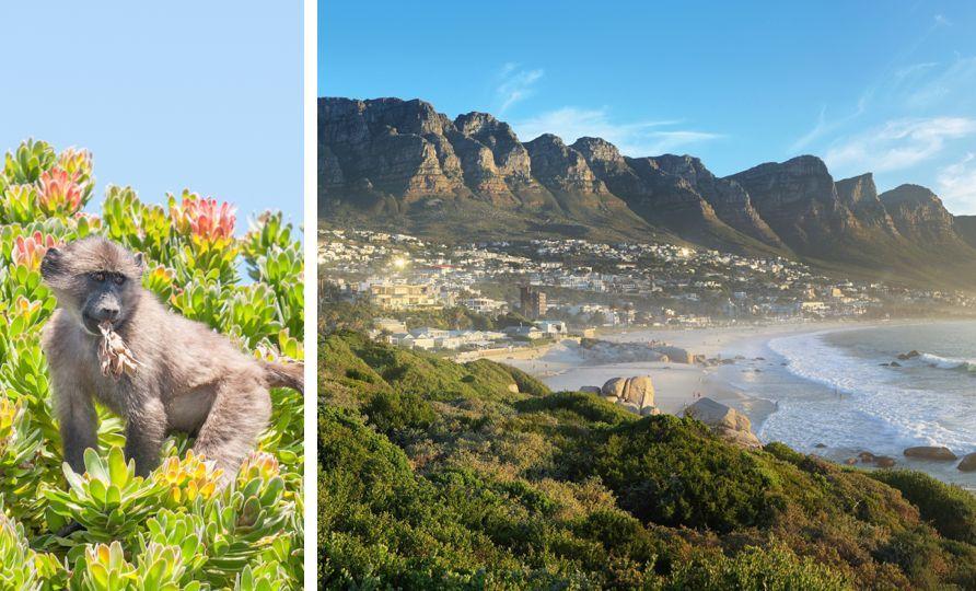 2-Cape Town Peninsular Tour.jpg