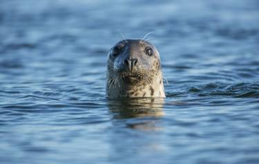 Wildlife - Seal_AdobeStock102653435