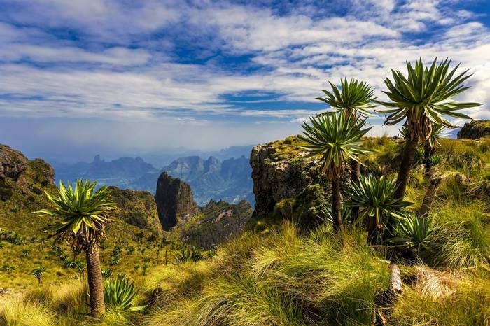 BOTANY TOUR Imet Gogo Peak & Giant Lobelia, Simien Mountains NP Shutterstock 568724434