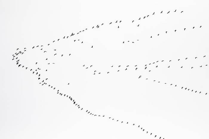 Cranes on migration (Javi Elorriaga).jpg