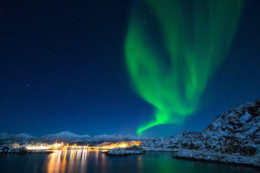 Wildlife Amp Northern Lights In Senja Norway