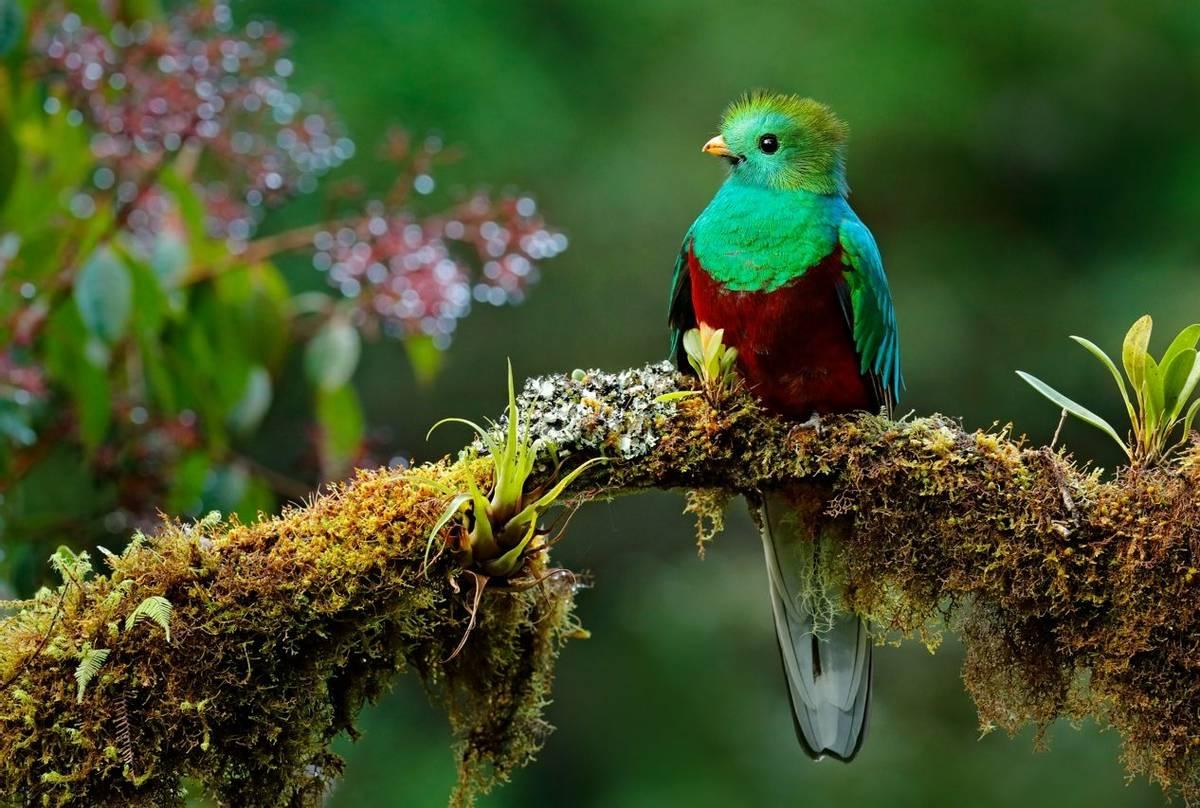 Costa Rica (Resplendent Quetzal)