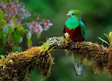 Tailormade Costa Rica