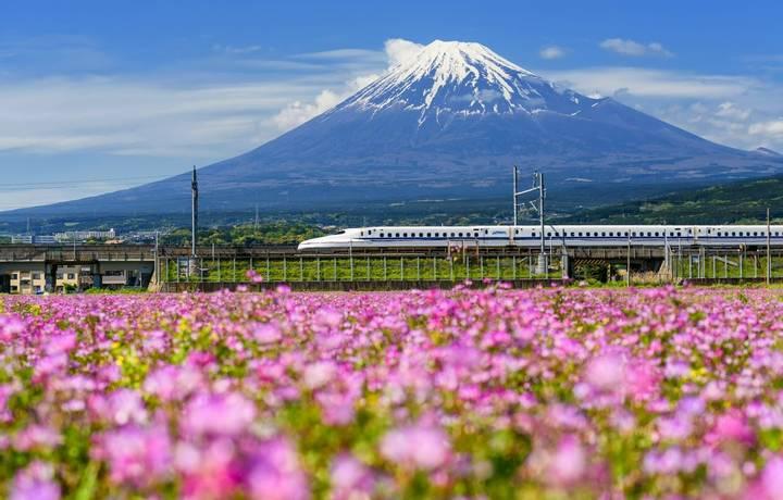 SHIZUOKA JAPAN - MAY 05 2017: Shinkansen or JR Bullet train running pass through Mt. Fuji and Shibazakura at spring. Super h…