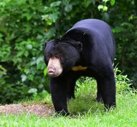 Sandakan - Rainforest Lodge Stay and Tour