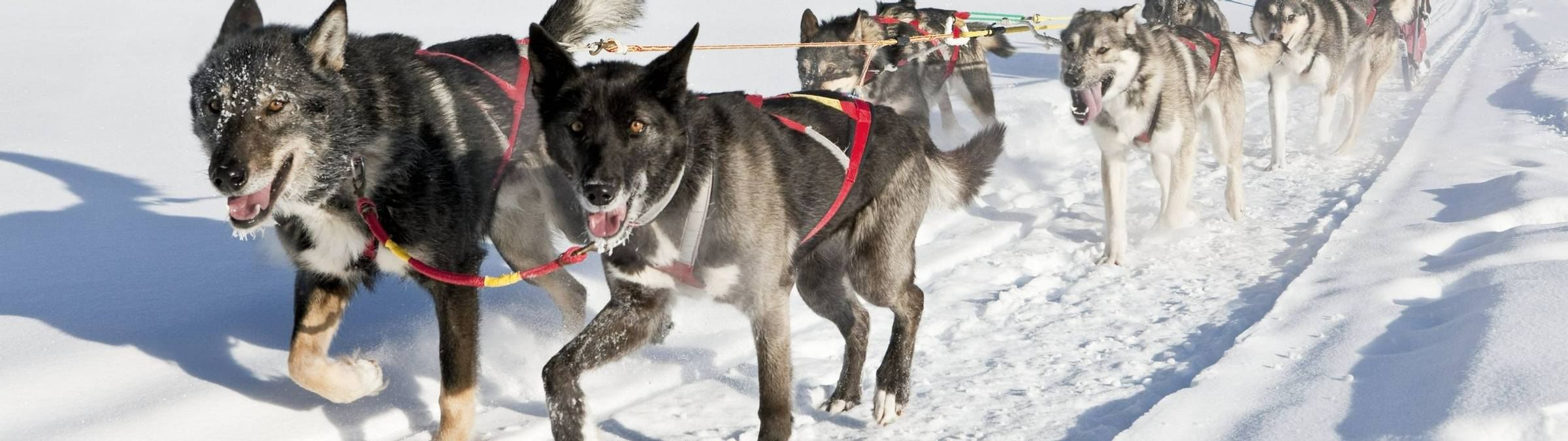 Dog Mushing at Uncommon Journeys, Whitehorse, Yukon, Canada; March 3, 2009.  Releases on file with Tourism Yukon.