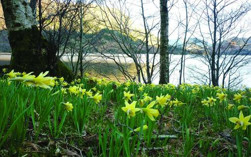 Southern Lake District Walks with Lakeland Poets & Authors Holiday