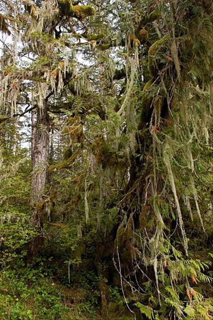Great Bear Rainforest (Paul Stanbury)
