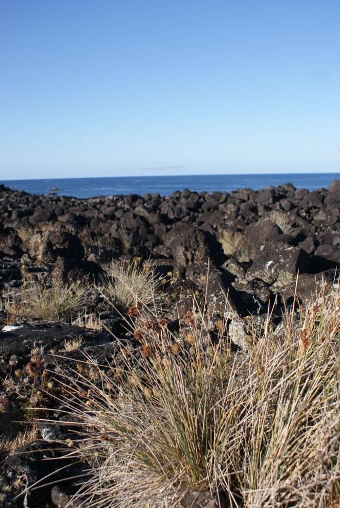 Volcanic boulder coastline (Ed Drewitt)