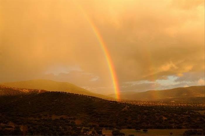 Rainbow (David Morris)