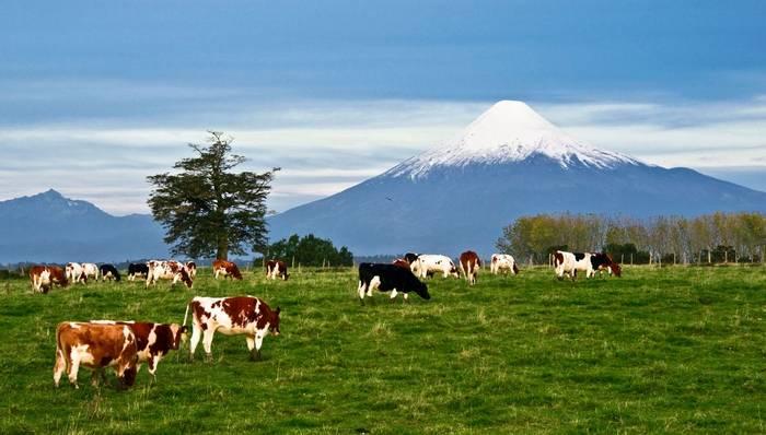 Osorno Volcano, Lake Region Chile Shutterstock 163384211