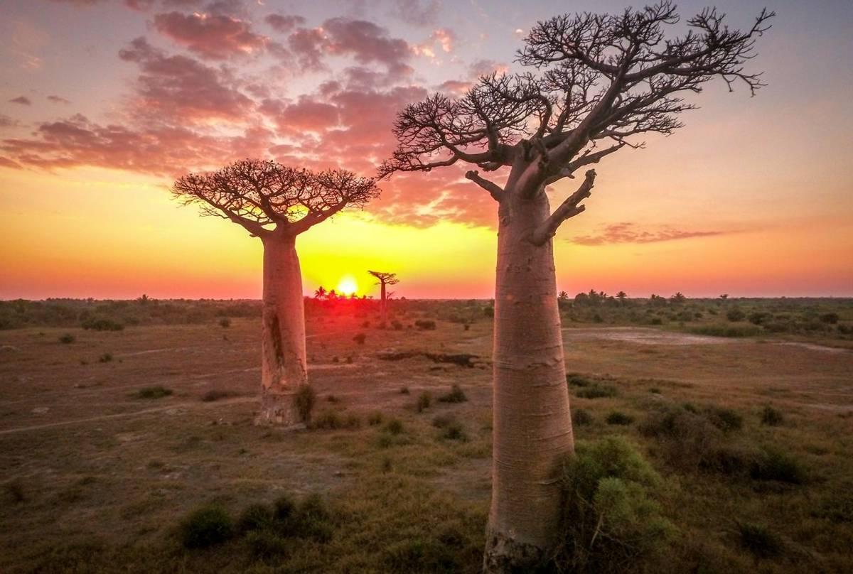 Baobab trees, Madagascar shutterstock_585908162.jpg