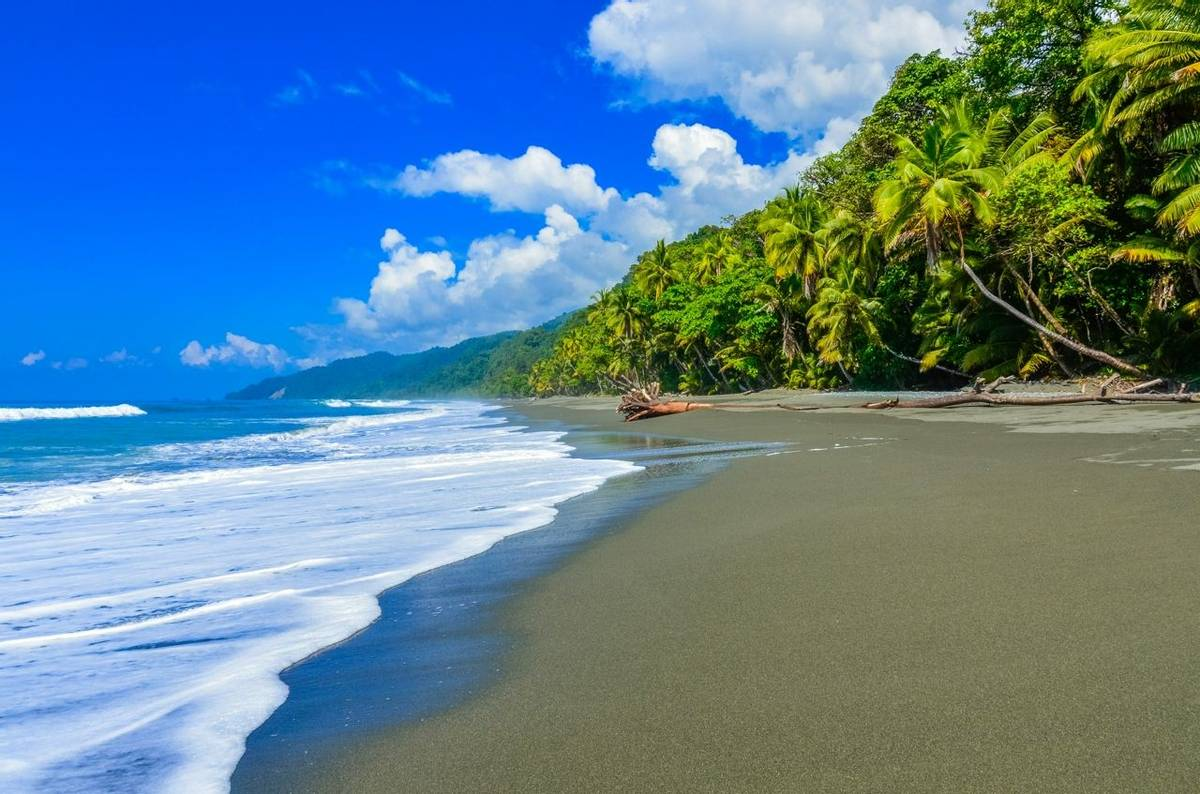 Wild beach at Corcovado Jungle in Costa Rica
