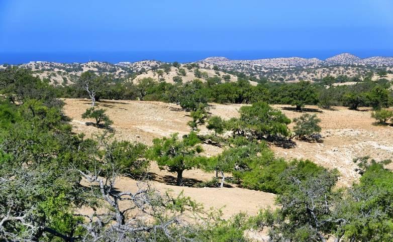 Africa-Morocco-ArganTreeForest-AdobeStock_103917707.jpeg