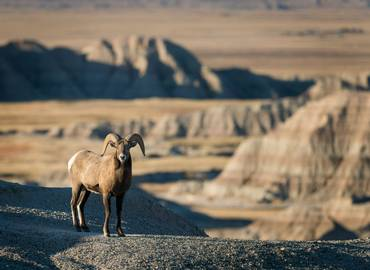 The Dakotas - Birds & Mammals of the Badlands