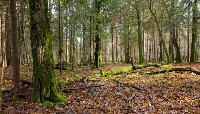 Bialowieza Forest, Poland Shutterstock 585569342