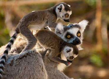 Tailormade Madagascar