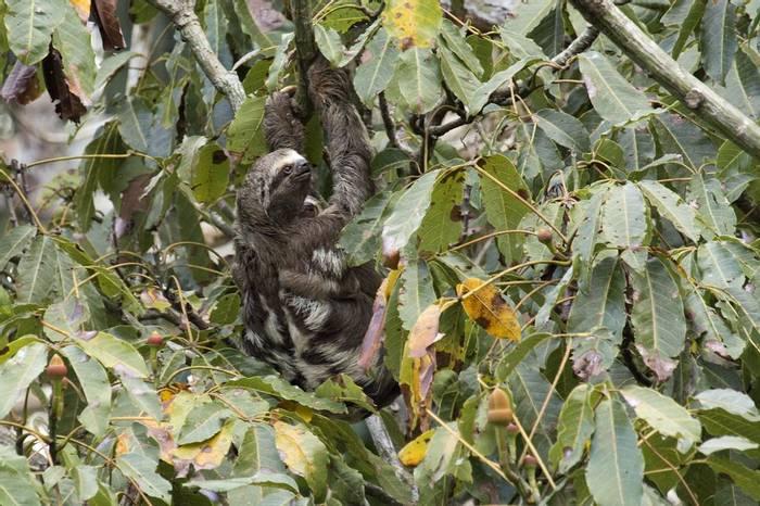 Sloth (Lee Morgan)