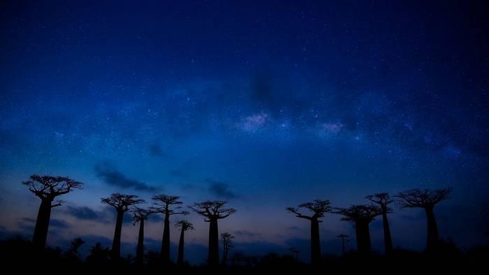 Avenue Of Baobabs (Nok Lek)