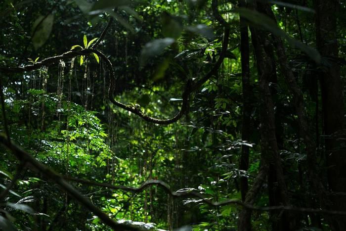 Ankasa Forest, Ghana shutterstock_1607023984.jpg