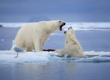 Franz Josef Land  - Russia's Arctic Wilderness