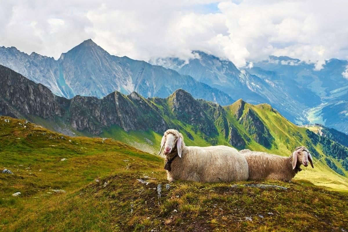 Austria - Mayrhofen - AdobeStock_90327187.jpeg