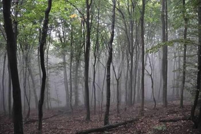 Early morning Beech woodlands (Jon Stokes)