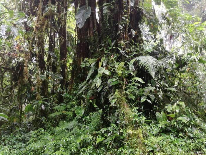 Tatama National Park Montezuma - Rob Smith
