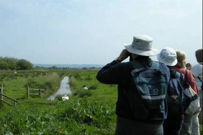 The group scanning for Bitterns across the marshes (Dave Newitt)