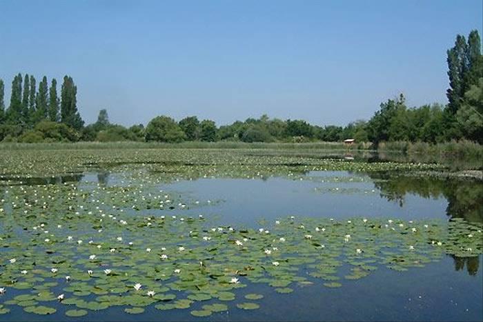 Water Lillies (Tom McJannet)
