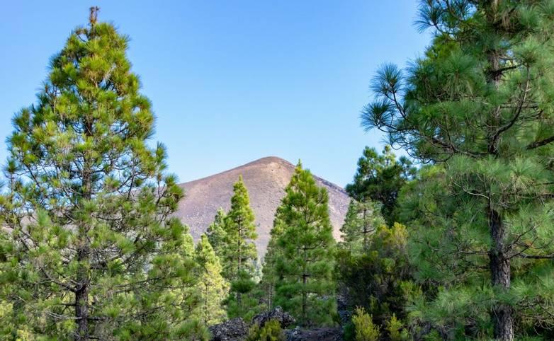 Looking through the trees to Pico Birigoyo, La Palma Island, Canaries