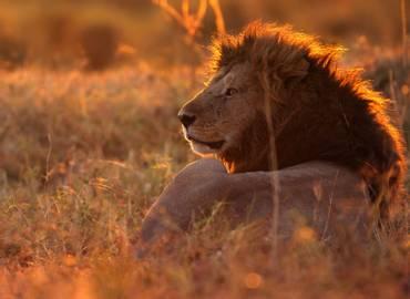 Go Slow ... in Kenya's Masai Mara