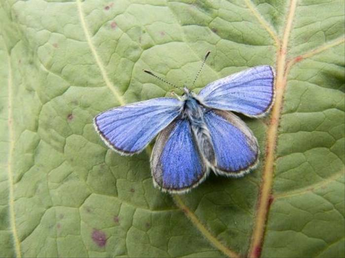 Alpine Blue